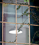 Architectural Lettuce