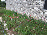 the native plants that volunteers planted a month earlier looking lovely in the spring.  Plants donated by the Wildflower center