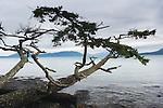 Fidalgo Island, Washington