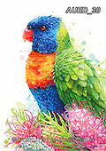 Carlie, REALISTIC ANIMALS, REALISTISCHE TIERE, ANIMALES REALISTICOS, paintings+++++Rainbow-Lorikeet,AUED30,#A#, EVERYDAY ,australian wildlife
