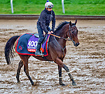 October 27, 2015 :  Bawina (IRE), trained by Carlos Laffon-Parias and owned by Wertheimer et Frere, exercises in preparation for the Breeders' Cup Filly & Mare Turf at Keeneland Race Track in Lexington, Kentucky on October 27, 2015.  Scott Serio/ESW/CSM