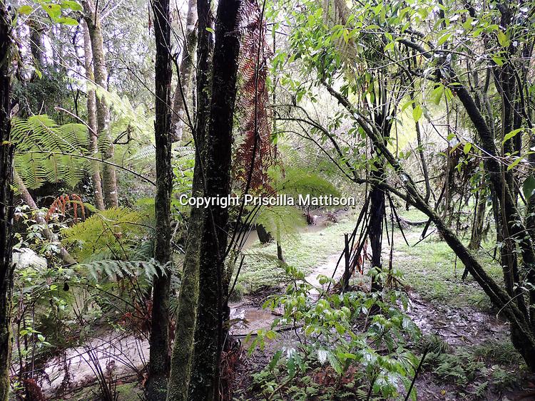 Waitomo, New Zealand - September 17, 2012:  Some light reaches the damp rainforest.