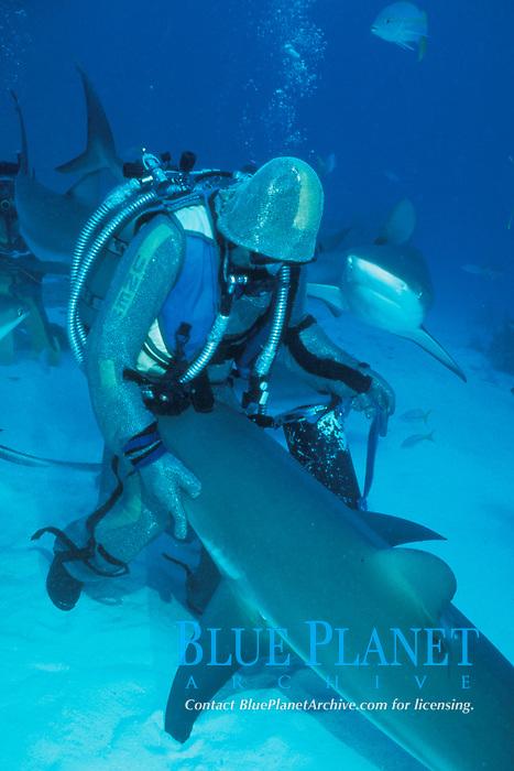scuba diver in chain mail suit hand feeds Caribbean reef sharks, Carcharhinus perezii, Grand Bahama Island, Bahamas, Caribbean, Atlantic