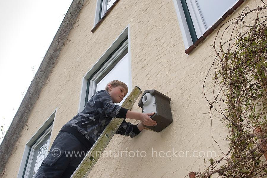 Junge, Kind hängt Nistkasten auf, Anbringung eines Vogel-Nistkasten an einer Hauswand, Fassade