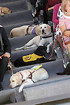 Guide dogs during the 25th anniversary of 'Perro Guia ONCE's Foundation'. September 24, 2015.(ALTERPHOTOS/Acero)