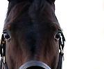 17 January 2010.   Kentucky Stallion Farms. Ambassador at Crestwood Farm in Lexington, KY.