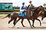 Atlantic Bull on post parade for The Smile Sprint Handicap (G2), Calder Race Course, Miami Gardens Florida. 07-07-2012.  Arron Haggart/Eclipse Sportswire.