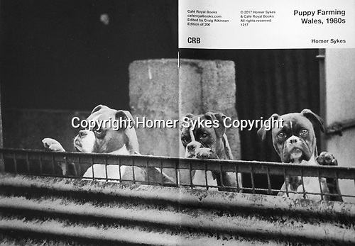 Puppy Farming Wales, 1980s. Cafe Royal Books<br /> <br /> £15-00 including p&p in UK
