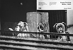 Puppy Farming Wales, 1980s. Cafe Royal Books<br />