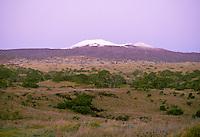 Snow capped Mauna Kea volcano at sunrise. Big Island.