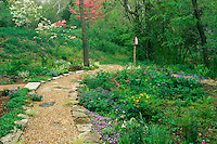 Spring awakens the garden as color replaces and fills in with new growth-- flowering dogwood, bleeding heart, snow drops and other spring flowers welcome those along the path