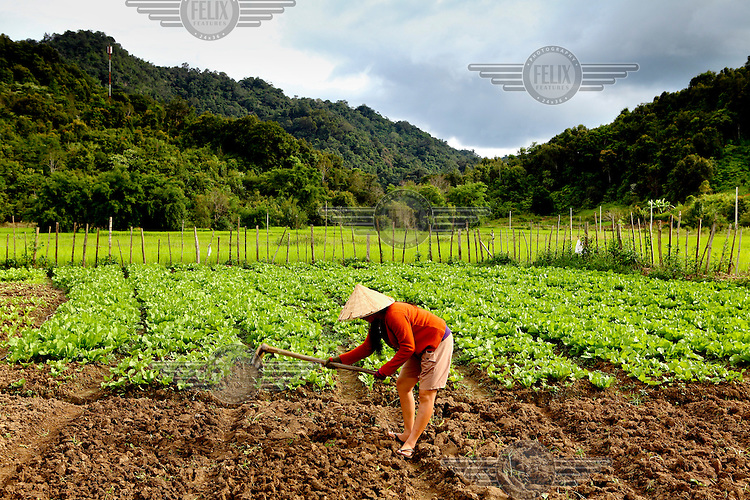 A woman prepares a field for planting seedlings.