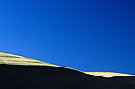 Cultivated  wheat field abstract with blue sky Eastern Washington State USA