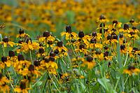 Wildflowers Tallgrass Prairie
