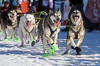 Mats Pettersoon lead dogs dig in as they leave the start line during the Ceremonial Start of the 2016 Iditarod in Willow, Alaska.  March 06, 2016