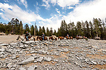 Cowboys leading pack horses across the granite slope, John Muir Wilderness, Sierra National Forest, on the western slope of the Sierra Nevada, California