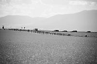 peloton en route<br /> <br /> st16: Morain-en-Montagne to Bern (SUI) / 209km<br /> 103rd Tour de France 2016