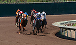 Thoroughbreds lean into the rail in the home stretch during a race at the Del Mar Racetrack in California.