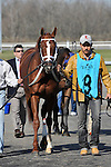 27 March 2010: Dean's Kitten being led into the paddock for the 39th running of the G2 Lane's End Stakes at Turfway Park in Florence, Kentucky.