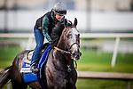 HALLANDALE BEACH, FL - JAN 27: Arrogate, with Dana Barnes aboard gallops at Gulfstream Park Race Course on January 27, 2017 in Hallandale Beach, Florida. (Photo by Alex Evers/Eclipse Sportswire/Getty Images)