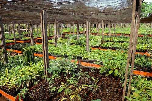 Trombetas, Para State, Brazil. Nursery for rainforest reforestation programme; Trombetas bauxite mine.