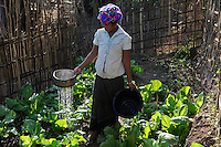 LAO P.D.R., province Oudomxay , village Houyta, ethnic group Khmu, project for water supply and sanitation by  CDEA, woman Ann watering her vegetable garden with waste water / LAOS, Provinz Oudomxay, Dorf Houyta , Ethnie Khmu , CDEA Projekt Wasserversorgung und sanitaere Einrichtungen fuer Bergdoerfer , Frau An bewaessert mit Abwasser ihren Gemuesegarten am Haus - NUR FÜR REDAKTIONELLE NUTZUNG, Kein PR !