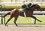 07 April 2011.  Hip #85 Indian Charlie - West's Secret filly, consigned by Wavertree Stables.