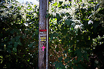 White strips of 1-inch conduit pipe, denoting a ritual Jewish Orthodox boundary called an eruv, are attached to a utility pole in Mahwah, N.J., U.S., on Sunday, August 27, 2016. Photographer: Michael Nagle