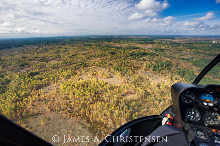 The Red Forest, an area of intensely radioactive forest, contaminated by the 1986 Chernobyl Nuclear Power Plant disaster, and subsequently bulldozed, the original trees buried. Survey flight in Ukrainian government R44 Astro helicopter, October, 2012.
