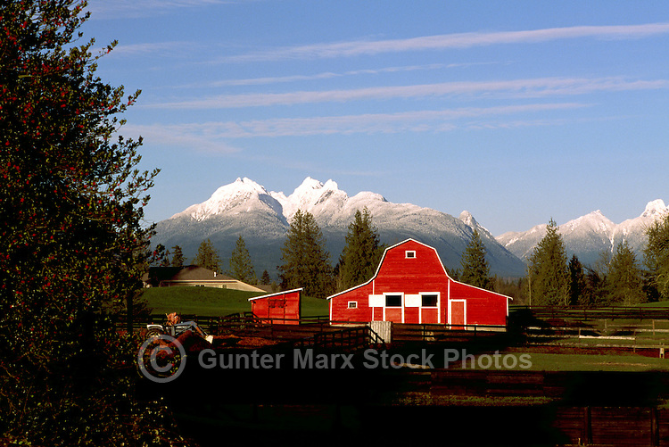 """Fraser Valley, Southwestern BC, British Columbia, Canada - Red Barn on Farm, Snow Capped """"Golden Ears"""" Mountains (Coast Mountains) in Golden Ears Provincial Park, Spring"""