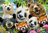 Howard, SELFIES, paintings+++++,GBHR970,#selfies#, EVERYDAY ,panda,pandas ,puzzle,puzzles