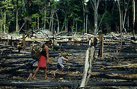 BRAZIL, Amazon, deforested rainforest, Madiha or Kulina indios in village Sossego, woman carry Manioc / BRASILIEN Amazonas, abgeholzter Regenwald, Indianer vom Stamm der Madiha auch Kulina im Indianerdorf Sossego, Frau trägt Maniok