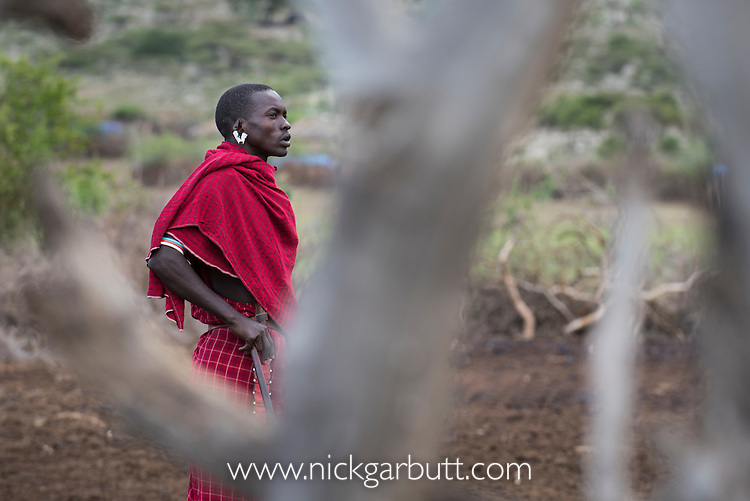 Maasai herds man in village near Ol Karien Gorge, Ngorongoro Conservation Area, Tanzania.