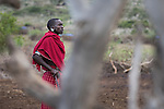 Maasai herds man in village near Ol Karien Gorge, Ngorongoro Conservation Area, Tanzania.