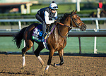 ARCADIA, CA - NOV 02: Money Multiplier, owned by Klaravich Stables Inc & William H. Lawrence and trained by Chad C. Brown, exercises in preparation for the Breeders' Cup Longines Turf at Santa Anita Park on November 2, 2016 in Arcadia, California. (Photo by Kazushi Ishida/Eclipse Sportswire/Breeders' Cup)
