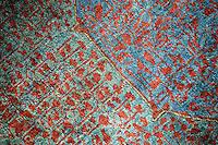 Sardi rug design detail.