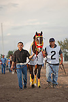 Trinniberg being lead to the saddling paddock for the Swale Stakes(G3) at Gulfstream Park, Hallandale Beach Florida. 03-10-2012