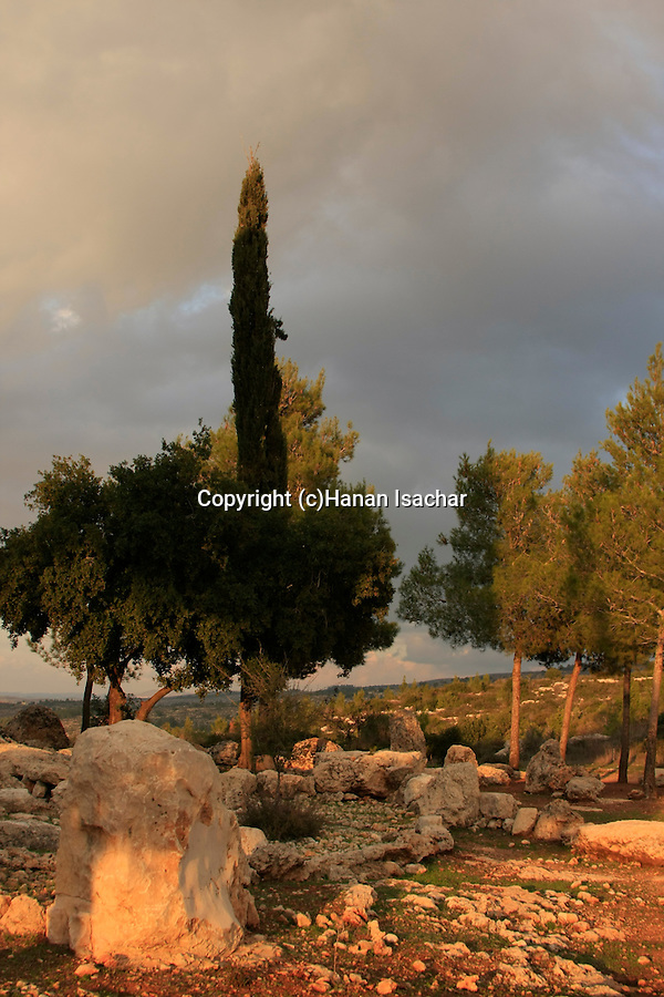 Israel, Jerusalem Mountains, The Japanese garden by Diefenbaker road