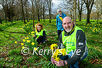 Getting ready for Daffodil day in Tralee town park on Friday were from left: Alanah O'Connor, Chris Griffin Chairperson and Ed O'Connor Vice Chairperson.