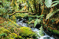 Small stream on Hollyford Track - Fiordland NP, Southland, New Zealand