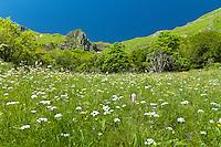 France, Puy-de-Dôme (63), Parc naturel régional des volcans d'Auvergne, massif du Sancy, réserve naturelle de la Vallée de Chaudefour // France, Puy de Dome, Parc Naturel Regional des Volcans d'Auvergne (Auvergne Volcanoes Natural Regional Park), Massif of Sancy, Chaudefour Valley Nature Reserve