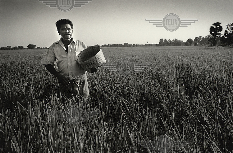 Michael Arulbasakam spreads fertiliser on his rice crop. This is one of the most fertile parts of the country and is known as the Mannar rice bowl. MAG (Mines Advisory Group) teams cleared large ares in 2009/10 here.
