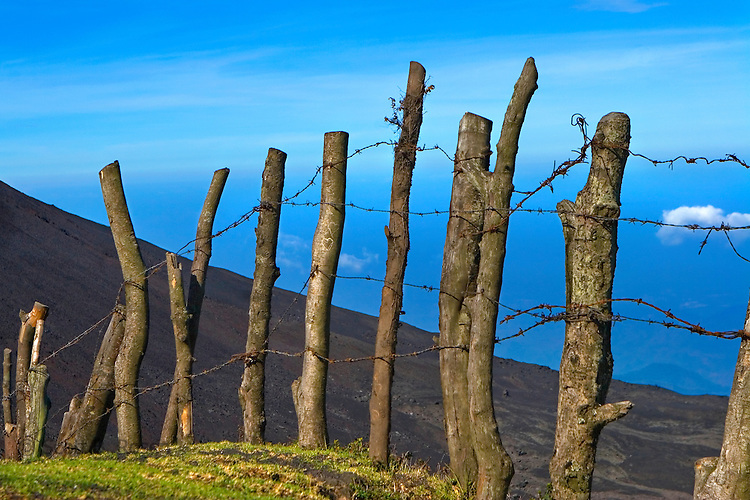 A fence of tree stumps and barbed wire on the trail to the Volcan de Pacaya, the cone shaped active Volcano in Guatemala