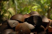Semente da Andiroba Árvore de grande porte, que chega a atingir 30 metros de altura. O fuste (parte que vai do solo aos primeiros galhos) é cilíndrico e reto. A casca é grossa, tem sabor amargo e desprende-se facilmente em grandes placas. Copa de tamanho médio e bastante ramosa. A inflorescência é uma panícula (espécie de cacho). As flores têm cor creme e o fruto é uma cápsula que se abre quando cai no chão, liberando de quatro a seis sementes. Floresce de agosto a outubro na Amazônia e frutifica de janeiro a maio. Porém, há muitas variações dependendo da região.É nativa da Amazonia.O oleo e as gorduras são extraidos e utilizados para a produção de: REPELENTES DE INSETOS, ANTISSEPTICOS, CICATRIZANTES e ANTIINFLAMATORIOS.<br /> Salvaterra, Marajó, Pará, Brasil<br /> Foto Paulo Santos/Interfoto<br /> 01/11/2008