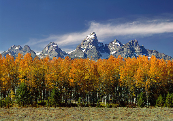 Grand Teton Peak (13770  ft)with autumn Aspen trees in Grand Teton National Park, Jackson Hole, Wyoming, USA. John offers private photo tours in Grand Teton National Park and throughout Wyoming and Colorado. Year-round.