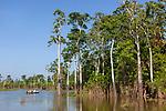 Curua Una. En traversant cette forêt aquatique, sombre et serrée, on imagine aisément un caïman noir, impassible entre deux troncs, en train de guetter sa proie<br /> Amazon dream