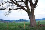 Europa, DEU, Deutschland, Nordrhein Westfalen, NRW, Sauerland, Wenden, Typische Landschaft, Baum, Eiche, Eichenbaum, Kategorien und Themen, Natur, Umwelt, Landschaft, Jahreszeiten, Stimmungen, Landschaftsfotografie, Landschaften, Landschaftsphoto, Landschaftsphotographie, <br /> <br /> [Fuer die Nutzung gelten die jeweils gueltigen Allgemeinen Liefer-und Geschaeftsbedingungen. Nutzung nur gegen Verwendungsmeldung und Nachweis. Download der AGB unter http://www.image-box.com oder werden auf Anfrage zugesendet. Freigabe ist vorher erforderlich. Jede Nutzung des Fotos ist honorarpflichtig gemaess derzeit gueltiger MFM Liste - Kontakt, Uwe Schmid-Fotografie, Duisburg, Tel. (+49).2065.677997, archiv@image-box.com, www.image-box.com]