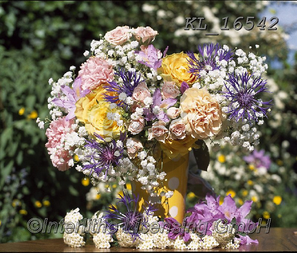 Interlitho-Alberto, FLOWERS, BLUMEN, FLORES, photos+++++,flowers,KL16542,#f#, EVERYDAY