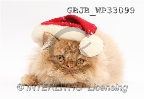Kim, CHRISTMAS ANIMALS, photos(GBJBWP33099,#XA#) stickers