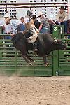 A bull rider in the air at the Jordan Valley Big Loop Rodeo, Ore.